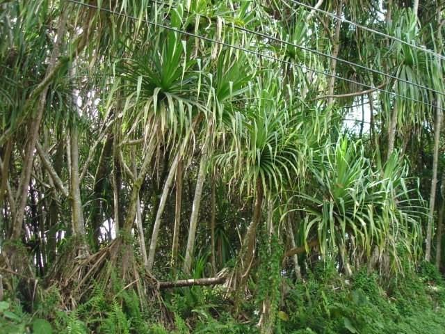 S Puni Lapa Lp, Pahoa, HI 96778 (MLS #617758) :: Aloha Kona Realty, Inc.