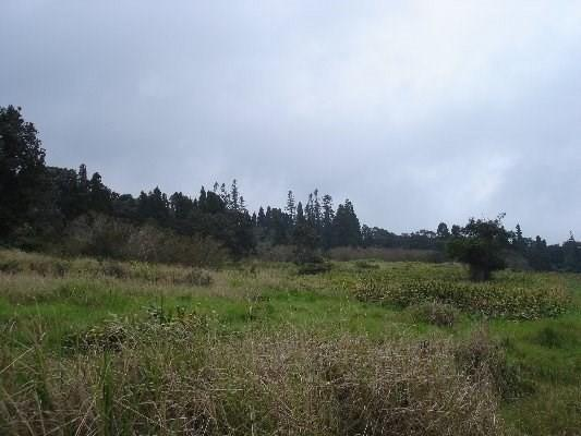 Haunani Rd, Volcano, HI 96785 (MLS #617972) :: Aloha Kona Realty, Inc.