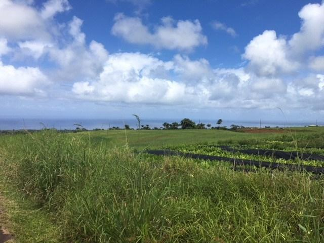 Address Not Published, Papaikou, HI 96781 (MLS #618747) :: Elite Pacific Properties