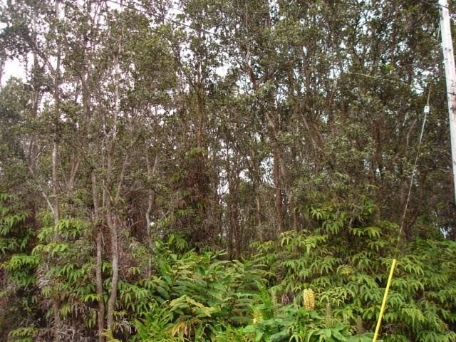 Address Not Published, Volcano, HI 96785 (MLS #619984) :: Aloha Kona Realty, Inc.