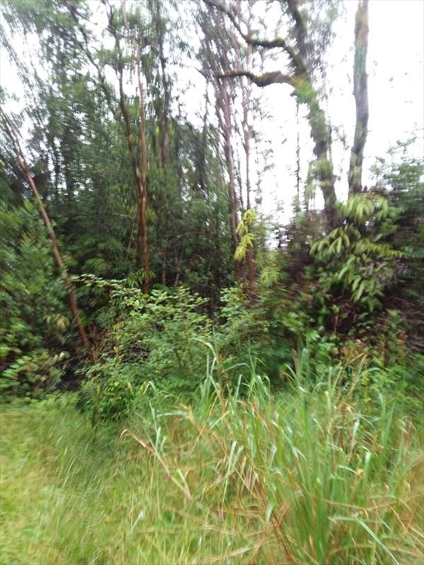 18-1391 Ihope Rd, Mountain View, HI 96771 (MLS #620533) :: Aloha Kona Realty, Inc.