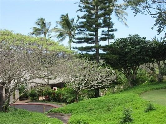 3-3400 Kuhio Hwy, Lihue, HI 96766 (MLS #620615) :: Elite Pacific Properties