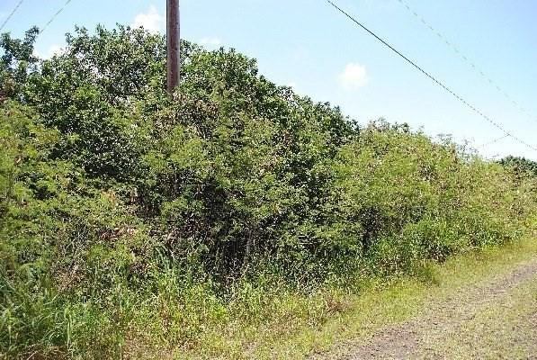Address Not Published, Naalehu, HI 96772 (MLS #620986) :: Aloha Kona Realty, Inc.