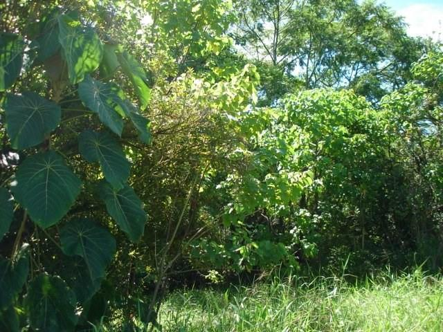 Address Not Published, Hilo, HI 96720 (MLS #621975) :: Iokua Real Estate, Inc.