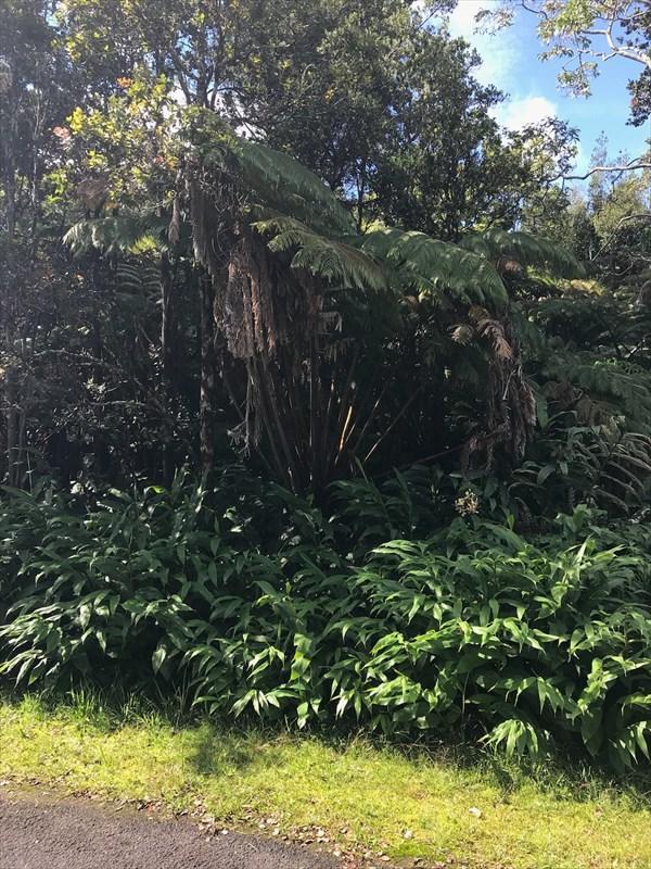 Kekoanui St, Volcano, HI 96785 (MLS #623433) :: Elite Pacific Properties