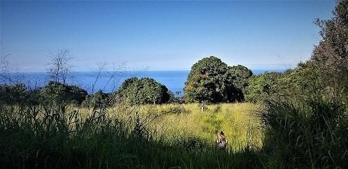 79-7159 Huliau Pl, Holualoa, HI 96725 (MLS #624817) :: Aloha Kona Realty, Inc.