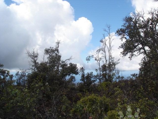 Palm Pkwy & Reef Cir, Ocean View, HI 96704 (MLS #626121) :: Elite Pacific Properties