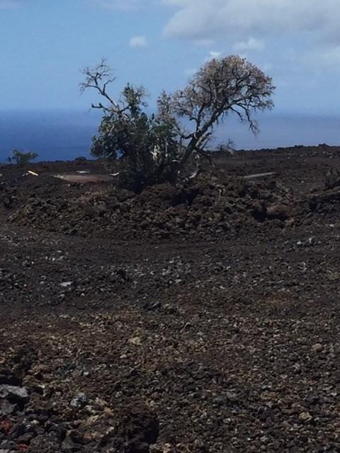 Address Not Published, Ocean View, HI 96704 (MLS #627748) :: Aloha Kona Realty, Inc.