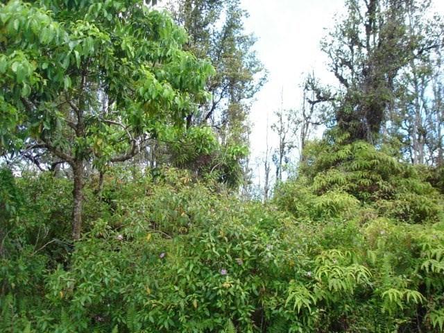 S Moku St, Pahoa, HI 96778 (MLS #628522) :: Elite Pacific Properties
