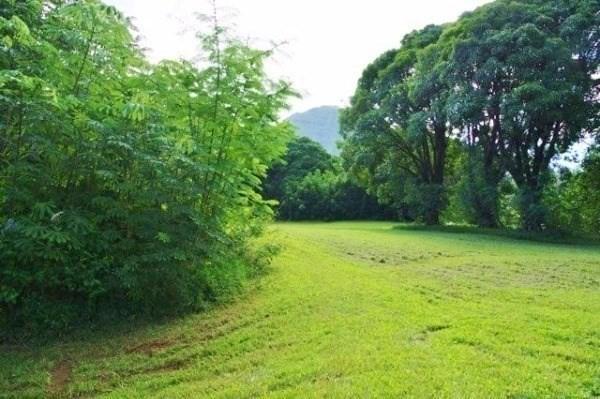 Kumu Road, Hanalei, HI 96714 (MLS #629640) :: Song Real Estate Team/Keller Williams Realty Kauai