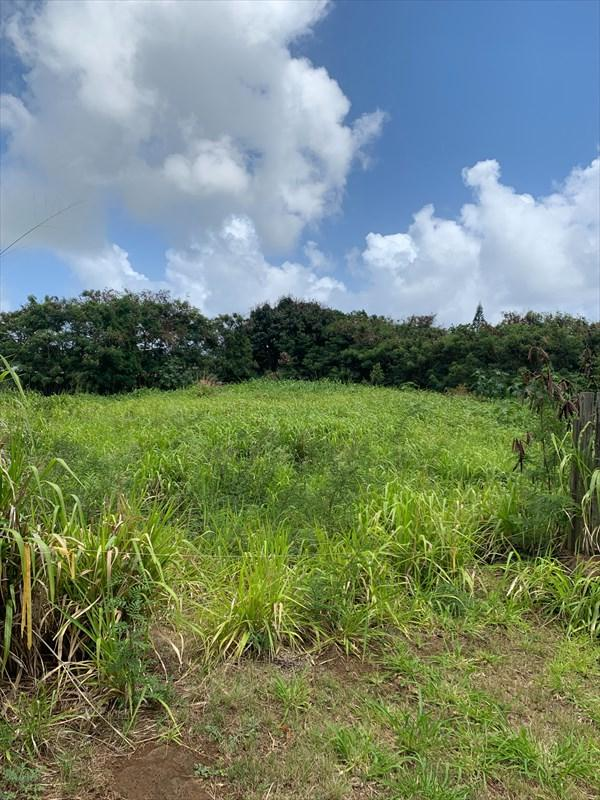 3180 Hikina Rd, Koloa, HI 96756 (MLS #629710) :: Elite Pacific Properties