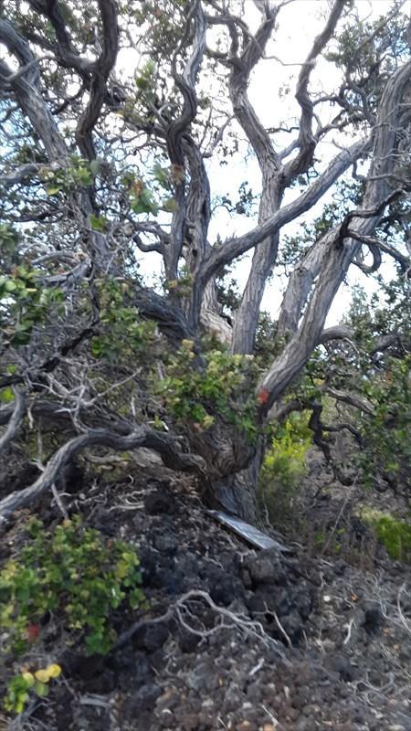 Tree Fern Ln, Ocean View, HI 96704 (MLS #630406) :: Aloha Kona Realty, Inc.