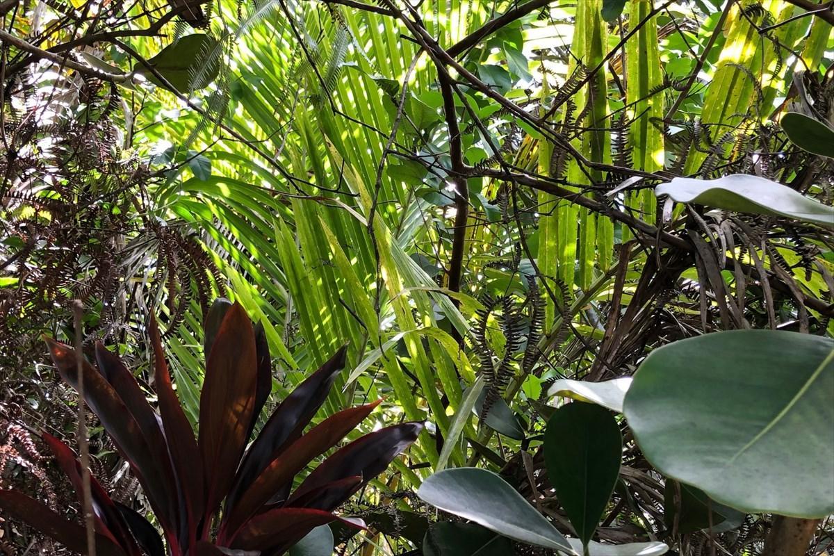 https://bt-photos.global.ssl.fastly.net/hawaii/orig_boomver_2_630820-2.jpg