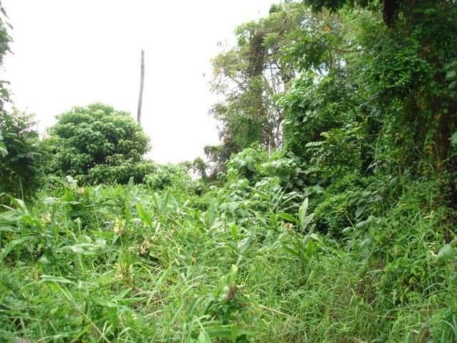 80 Kapaka St, Hilo, HI 96720 (MLS #630896) :: Aloha Kona Realty, Inc.