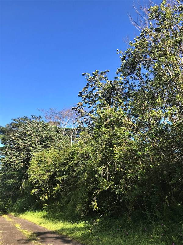 Pakalana Rd, Pahoa, HI 96778 (MLS #632873) :: Elite Pacific Properties