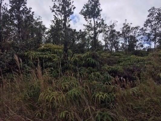 Address Not Published, Volcano, HI 96785 (MLS #633397) :: Elite Pacific Properties