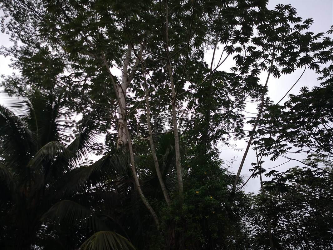 https://bt-photos.global.ssl.fastly.net/hawaii/orig_boomver_1_634062-2.jpg