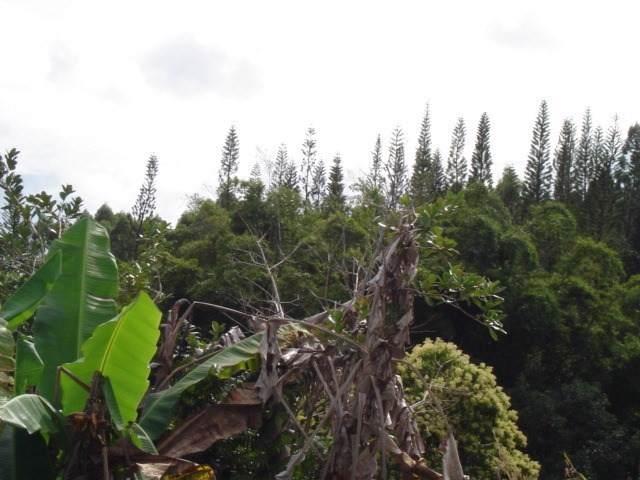 https://bt-photos.global.ssl.fastly.net/hawaii/orig_boomver_1_635038-2.jpg
