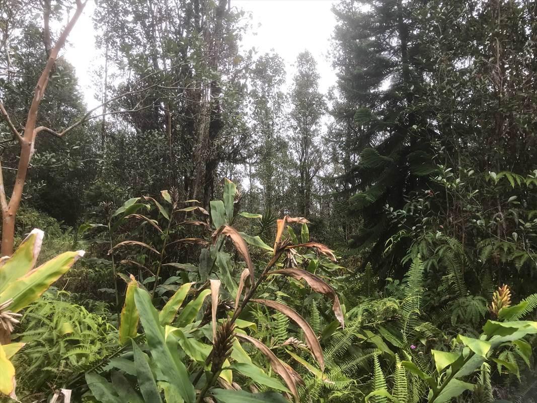 https://bt-photos.global.ssl.fastly.net/hawaii/orig_boomver_1_635448-2.jpg