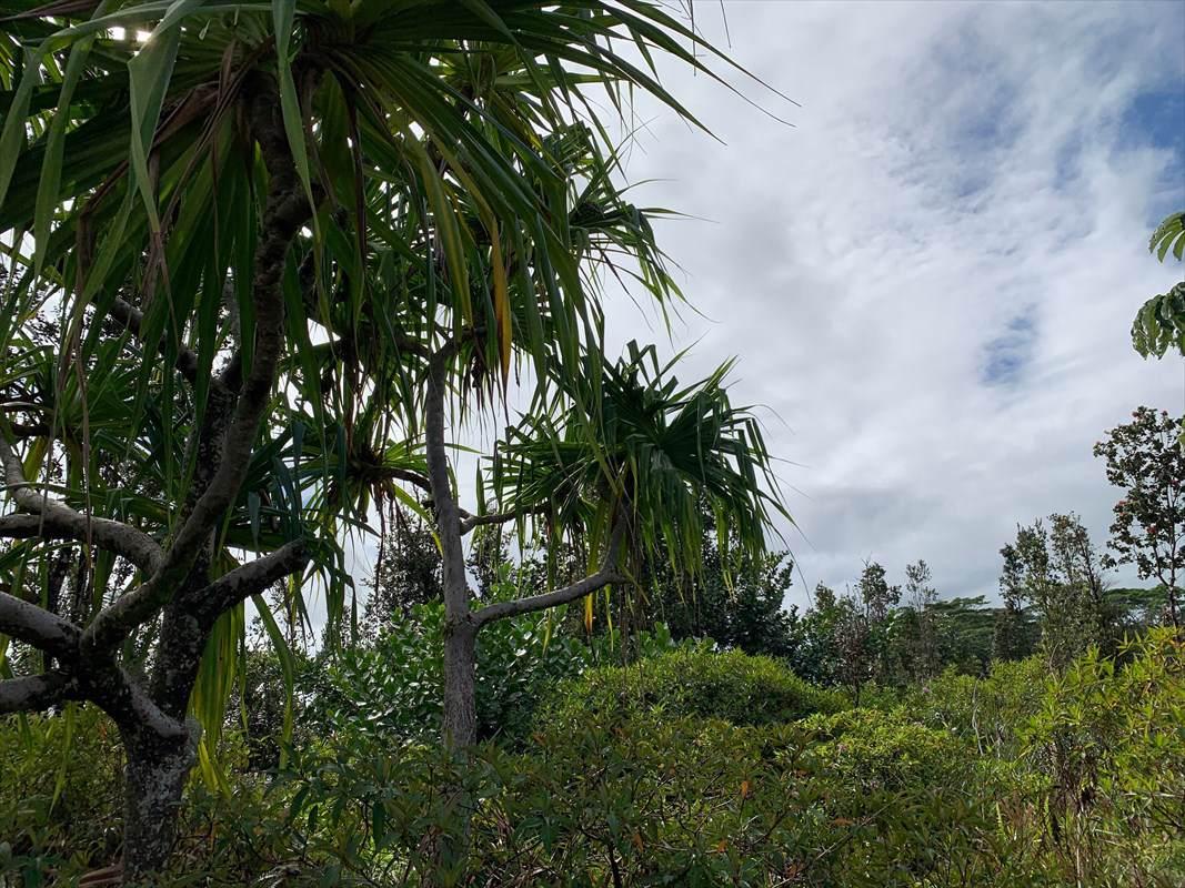 https://bt-photos.global.ssl.fastly.net/hawaii/orig_boomver_1_635631-2.jpg