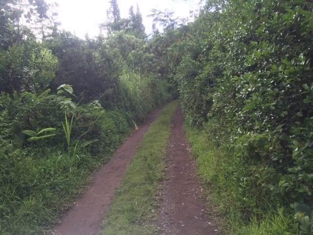Puua-Kapoho Rd - Photo 1
