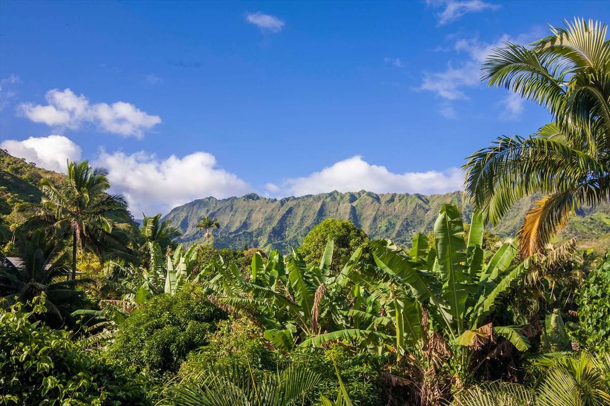 https://bt-photos.global.ssl.fastly.net/hawaii/orig_boomver_1_636019-2.jpg