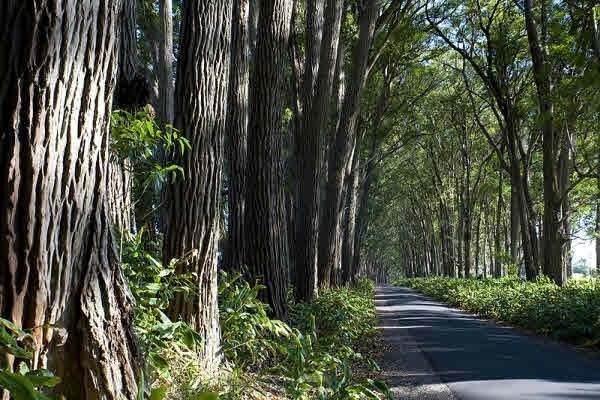 https://bt-photos.global.ssl.fastly.net/hawaii/orig_boomver_1_636397-2.jpg