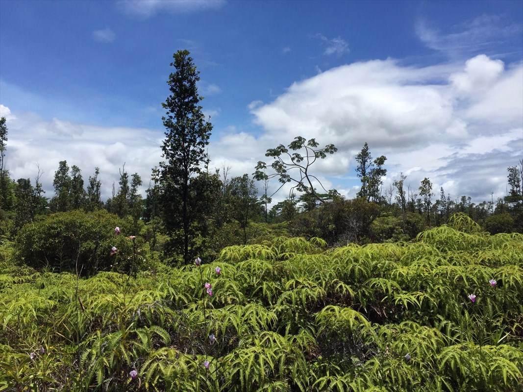 https://bt-photos.global.ssl.fastly.net/hawaii/orig_boomver_1_637602-2.jpg