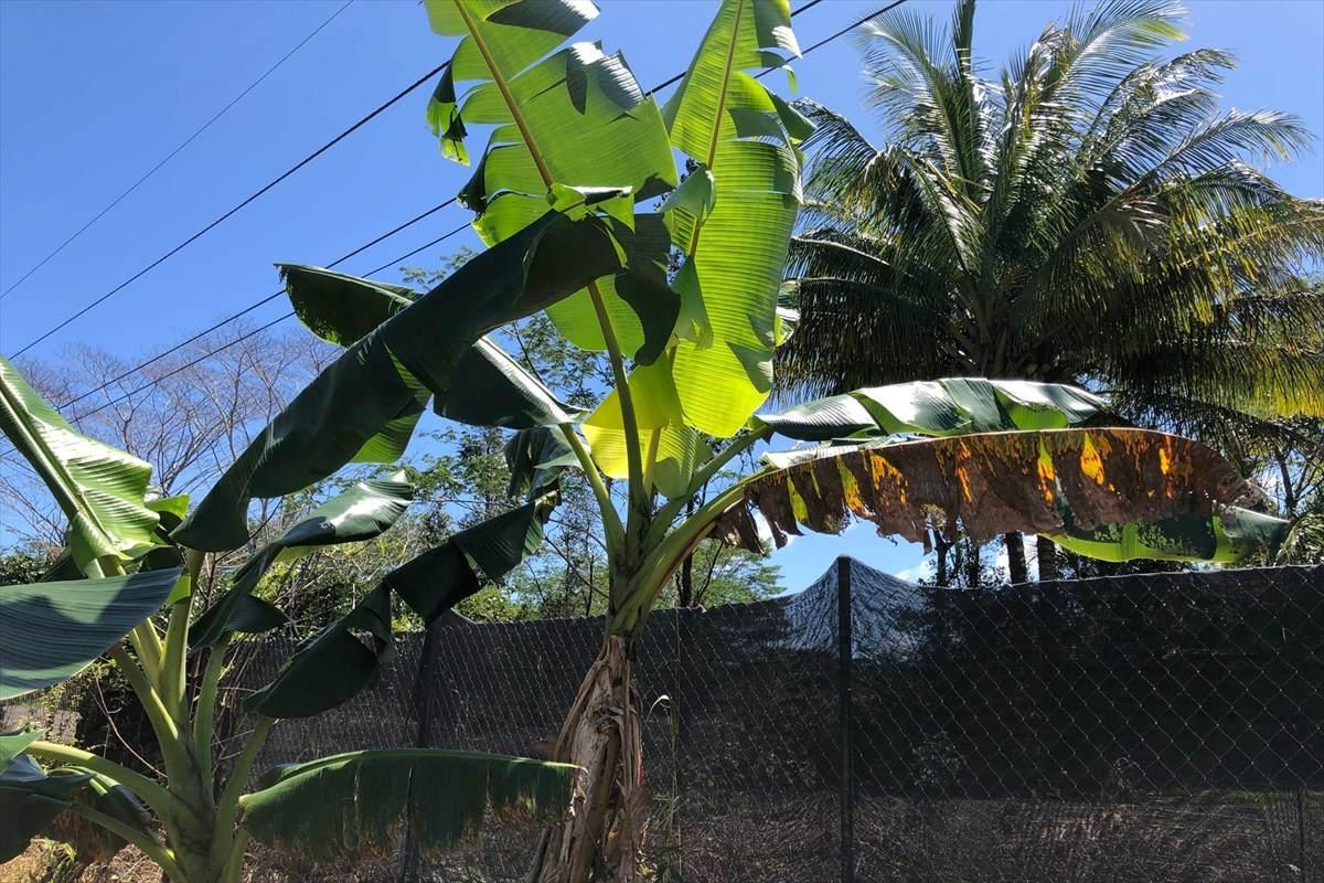 https://bt-photos.global.ssl.fastly.net/hawaii/orig_boomver_1_637640-2.jpg