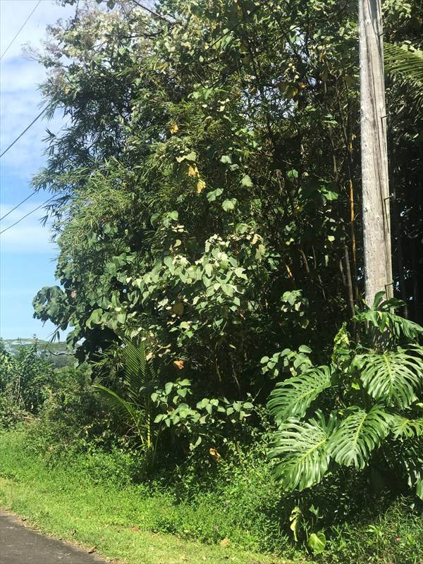 https://bt-photos.global.ssl.fastly.net/hawaii/orig_boomver_1_637689-2.jpg