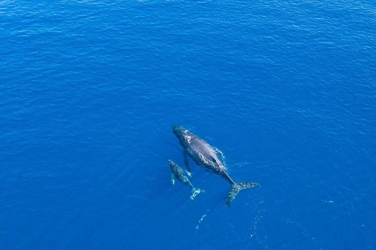https://bt-photos.global.ssl.fastly.net/hawaii/orig_boomver_1_638112-2.jpg