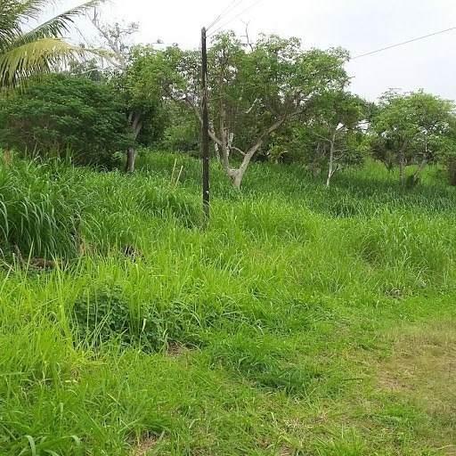 87-2720 Hawaii Belt Rd, Captain Cook, HI 96704 (MLS #638944) :: Song Team | LUVA Real Estate