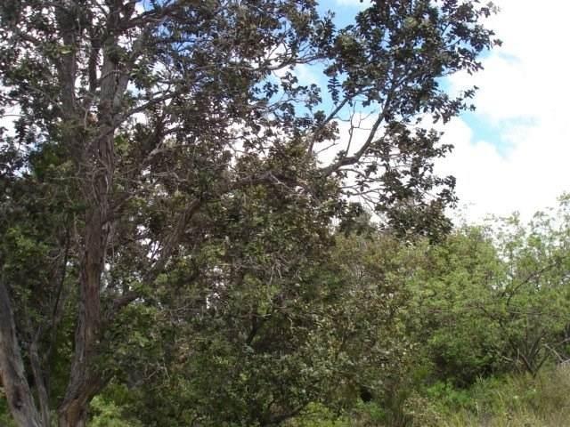 Coral Pkwy, Ocean View, HI 96704 (MLS #639351) :: Aloha Kona Realty, Inc.