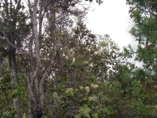 Paradise Pkwy, Ocean View, HI 96704 (MLS #639355) :: Aloha Kona Realty, Inc.