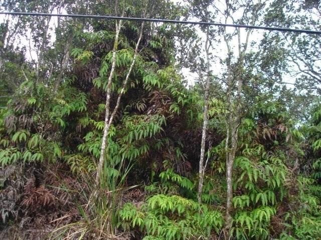Address Not Published, Volcano, HI 96785 (MLS #642494) :: LUVA Real Estate
