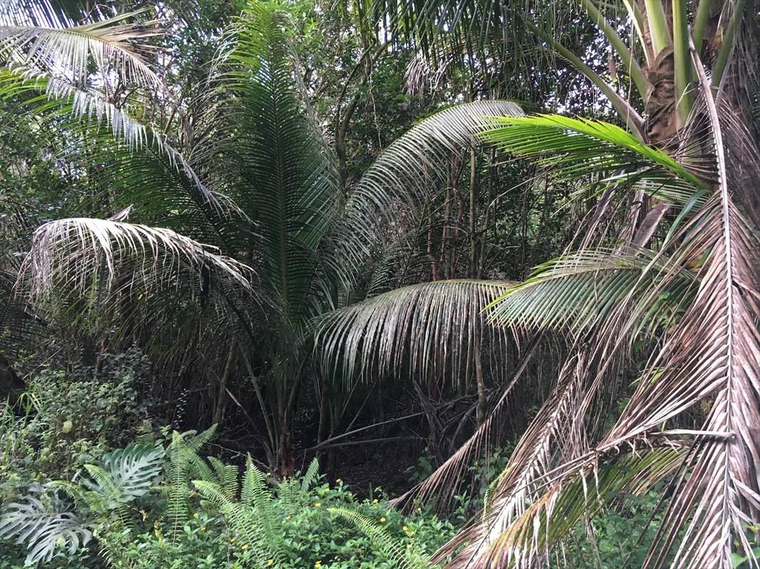 https://bt-photos.global.ssl.fastly.net/hawaii/orig_boomver_1_642522-2.jpg