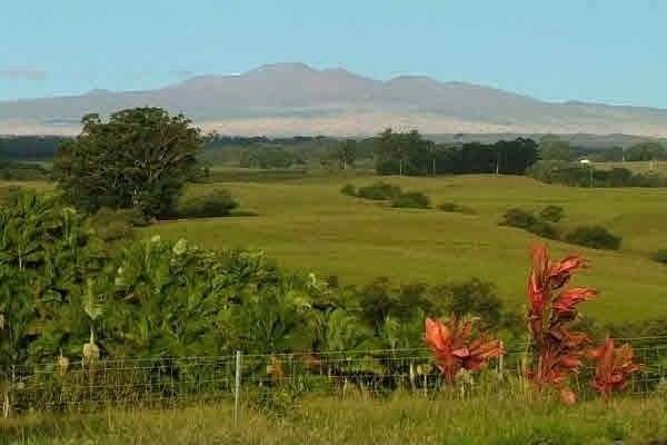 Address Not Published, Papaaloa, HI 96780 (MLS #642778) :: Corcoran Pacific Properties