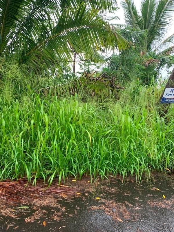 12-404 Oleole St, Pahoa, HI 96778 (MLS #643753) :: LUVA Real Estate