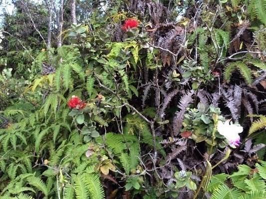 11-3375-A Mokuna St, Volcano, HI 96785 (MLS #644336) :: Corcoran Pacific Properties