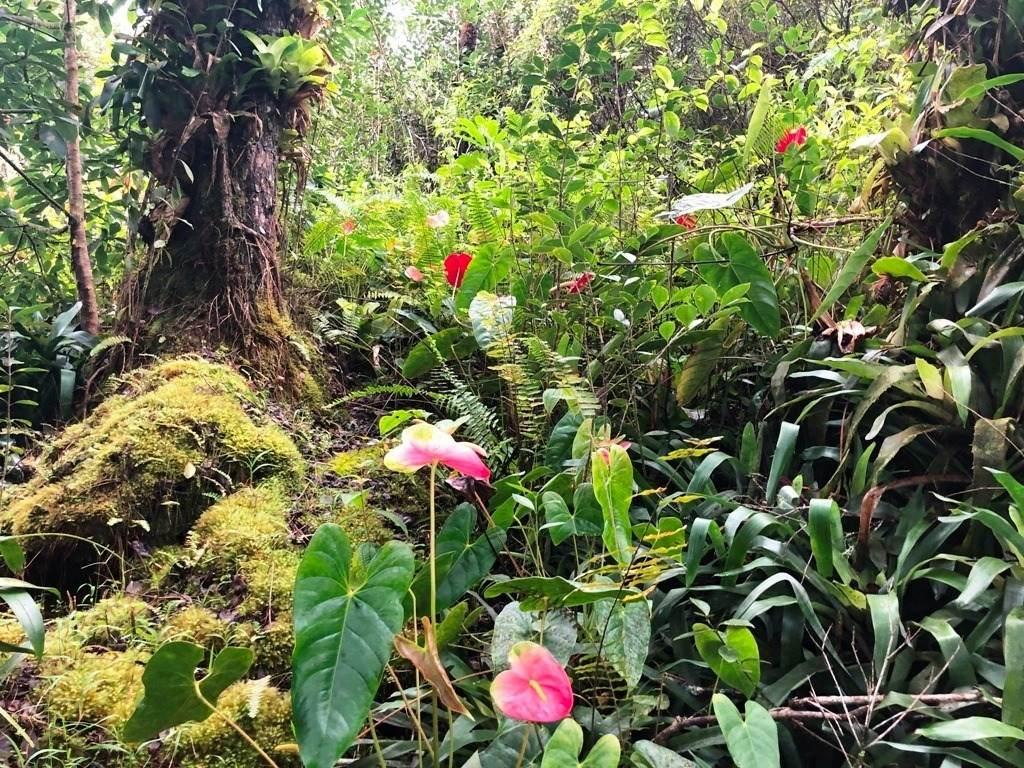 https://bt-photos.global.ssl.fastly.net/hawaii/orig_boomver_1_644593-2.jpg