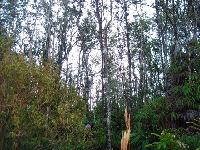 Ohialani Rd, Volcano, HI 96785 (MLS #645447) :: Hawai'i Life