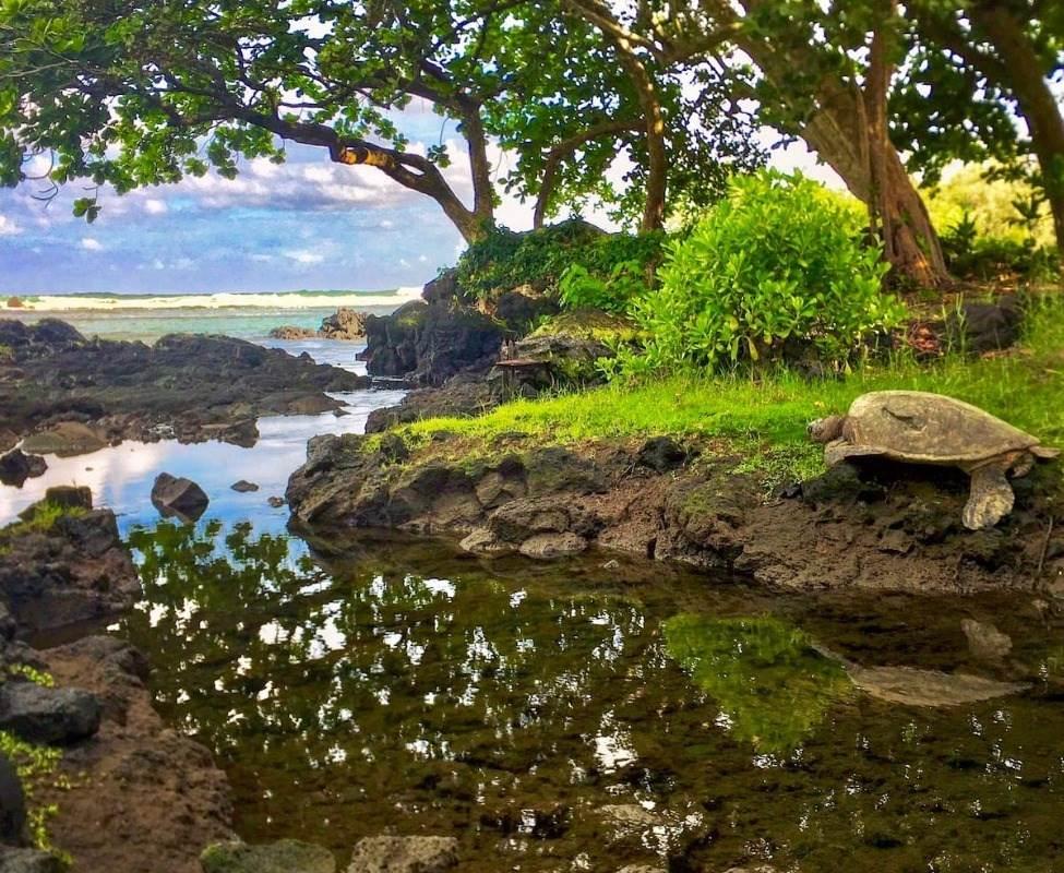 https://bt-photos.global.ssl.fastly.net/hawaii/orig_boomver_1_645663-2.jpg