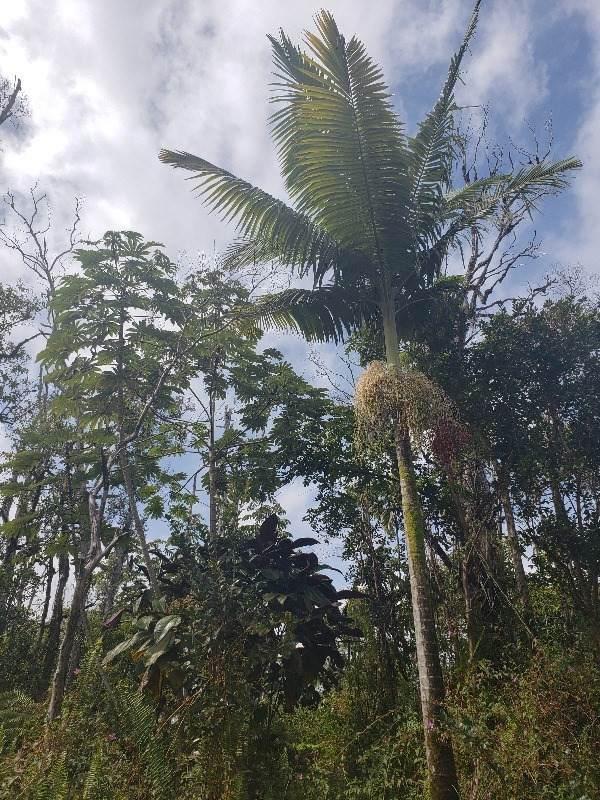 https://bt-photos.global.ssl.fastly.net/hawaii/orig_boomver_1_646174-2.jpg