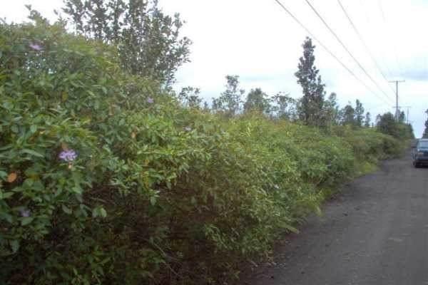 https://bt-photos.global.ssl.fastly.net/hawaii/orig_boomver_1_648593-2.jpg