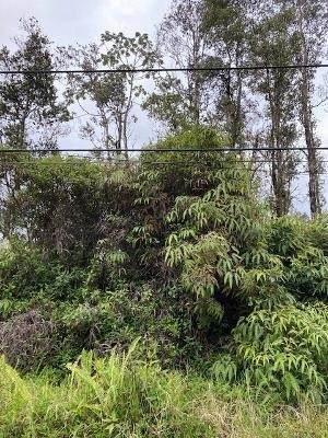 Sugarcane Ln - Photo 1