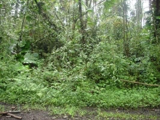 Paradise Rd, Pahoa, HI 96778 (MLS #649950) :: Corcoran Pacific Properties