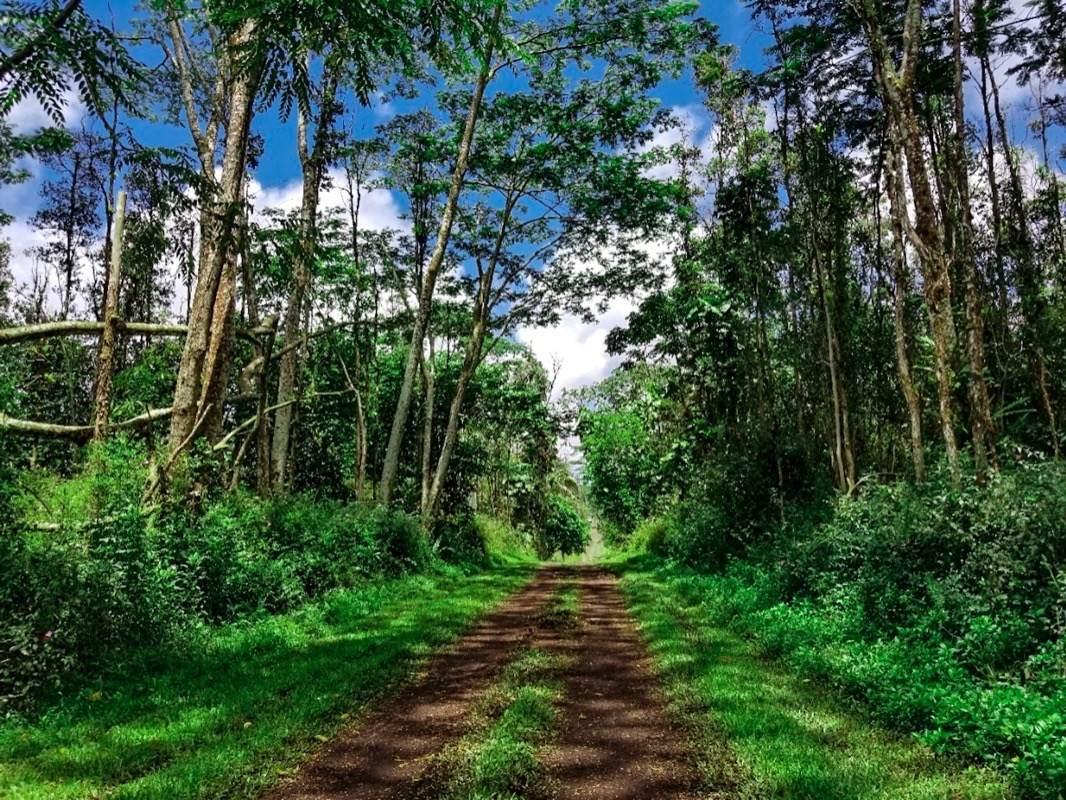 https://bt-photos.global.ssl.fastly.net/hawaii/orig_boomver_1_650198-2.jpg