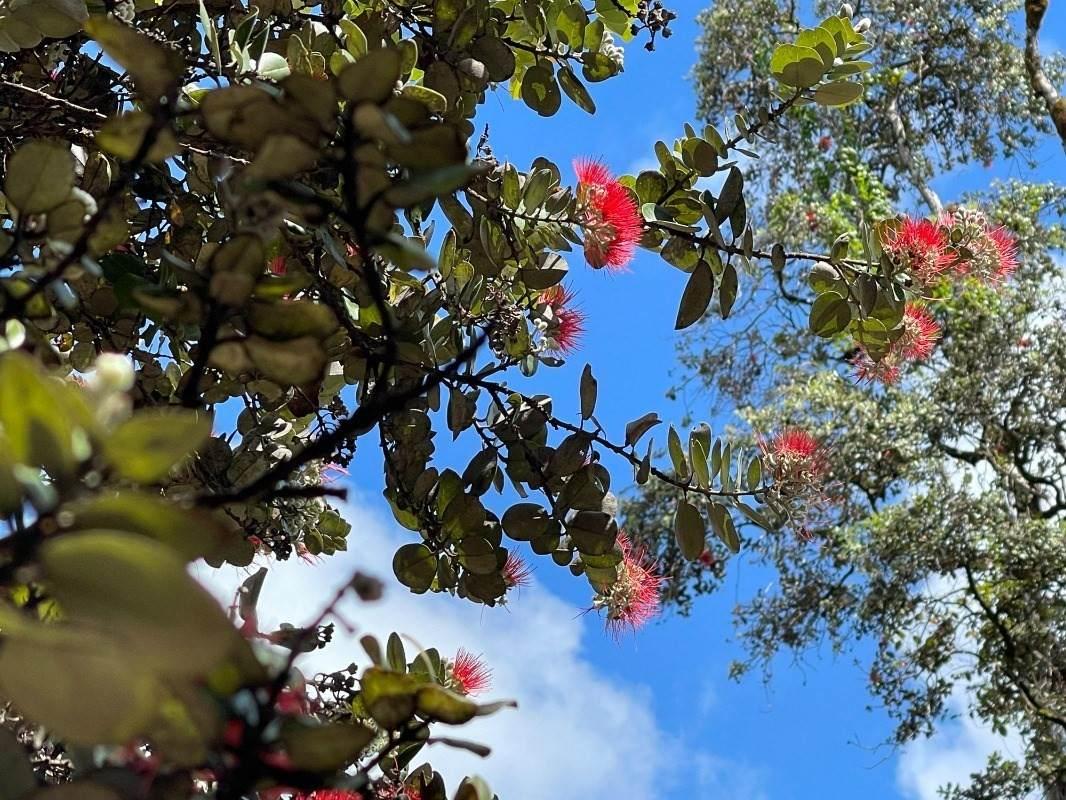 https://bt-photos.global.ssl.fastly.net/hawaii/orig_boomver_1_650534-2.jpg