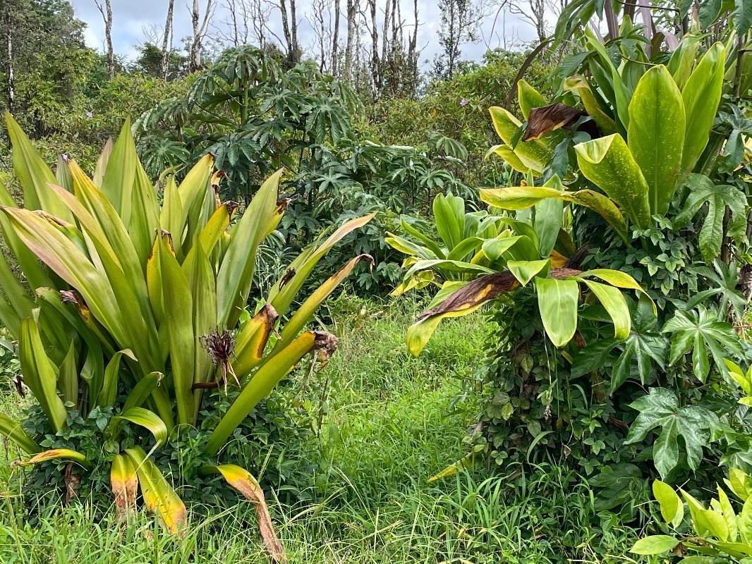 https://bt-photos.global.ssl.fastly.net/hawaii/orig_boomver_1_651099-2.jpg