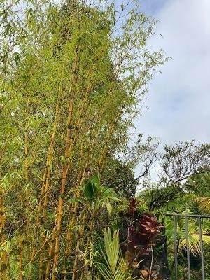 16-2118 Sugarcane Ln, Pahoa, HI 96778 (MLS #651177) :: Corcoran Pacific Properties